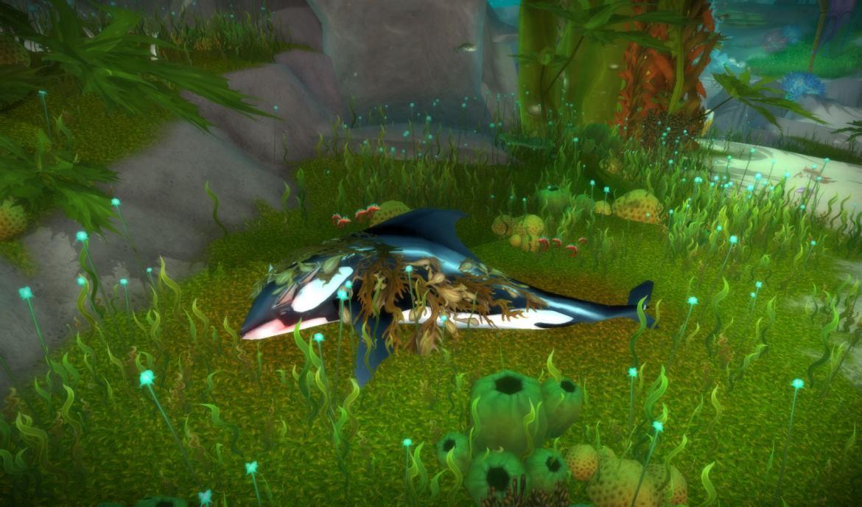 Dead Orca at Gnaw's Boneyard