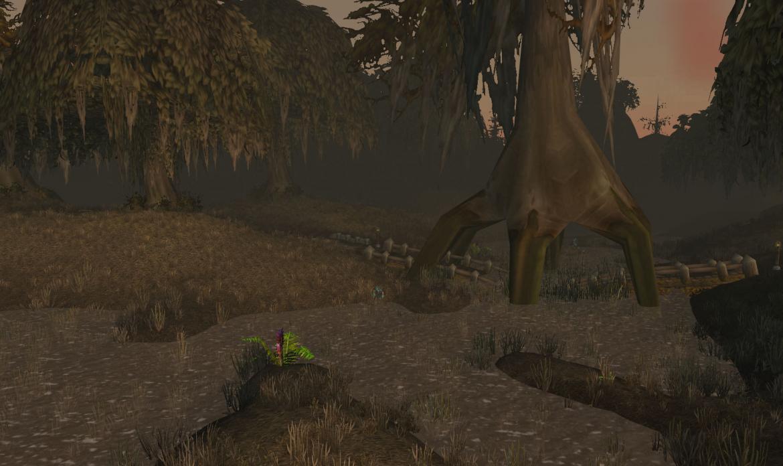 Swamp road through a tree