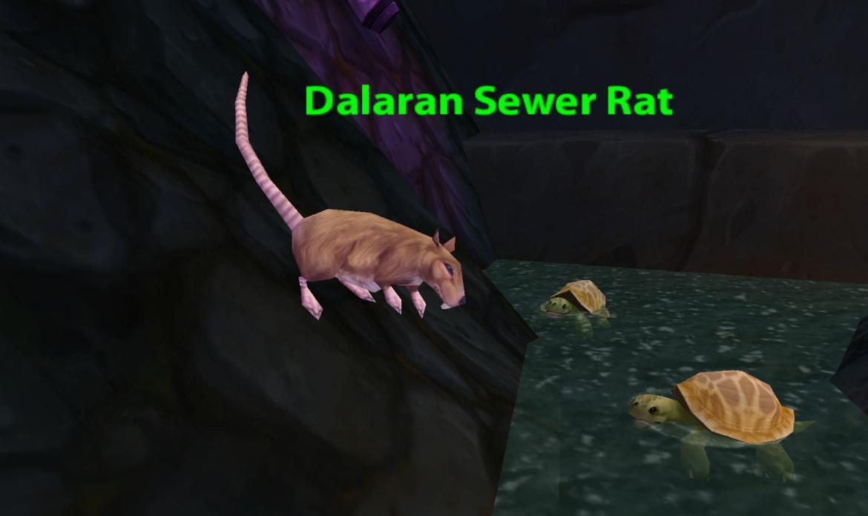 Dalaran Sewer Rat