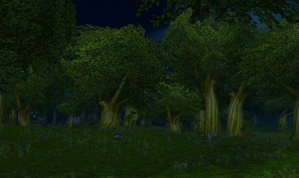 Forest by night
