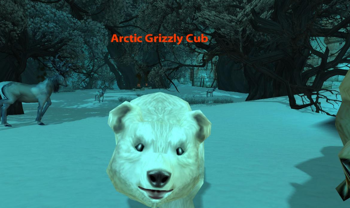 Arctic Grizzly Cub